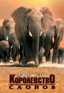 Discovery. Африка – королевство слонов